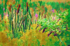 cat tails and poke weed - photo art