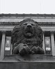 Guardian (willposh) Tags: england blackandwhite sculpture monochrome statue stone liverpool lion 2008 aslan 08 capitalofculture2008