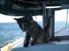 Dulcinea Takes the Helm