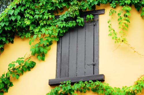 gray shutter