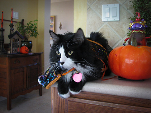 Halloween Cat by you.