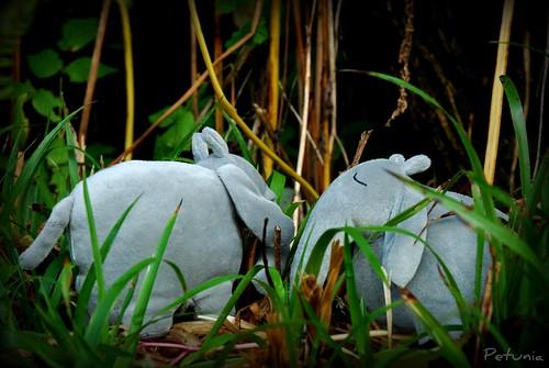 Elefantsafari 2