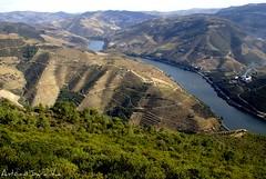 Rio Douro (Antnio Sardinha) Tags: portugal douro riodouro vinhas encostas ilustrarportugal