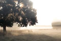 P*  (sixbysixtasy) Tags: park morning trees light shadow sun mist nature beauty fog mystery bench landscape 50mm dawn nikon f14 sunburst nikkor d80