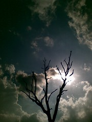 Till my last breath.. (Murtaza AG) Tags: winter tree silhouette ooty westernghats