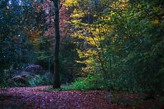 Out with Eric (CharlesFred) Tags: autumn holland fall netherlands dutch amsterdam herfst nederland autunno paysbas lateafternoon autumne amstelparktakingphotosinthedark novembersundayamsterdamamsterdam autumninamsetrdam