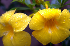 flower3 (dennis_collado) Tags: flower nature n taken valley cagayan