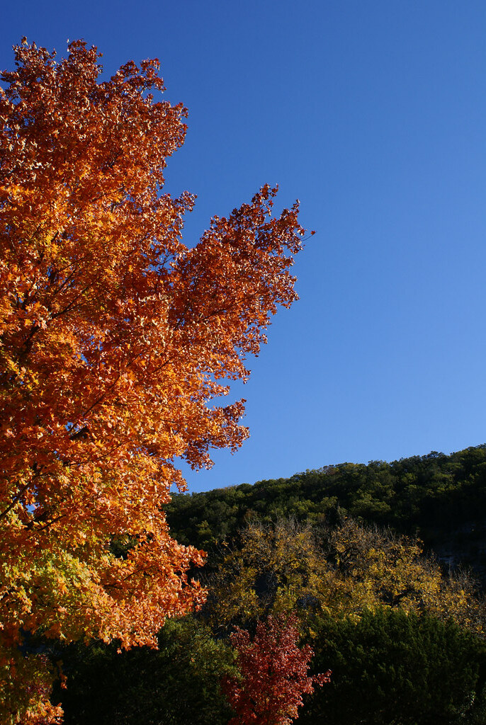 Lost Maples_08