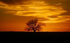Solo Silhouette (Wavy1) Tags: sunset orange tree silhouette colorado cottonwood lonely lajunta lasanimas highlonesome pfogold herowinner