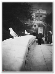 * (1Ehsan) Tags: bridge blackandwhite bw bird crossing iran esfahan isfahan marnan