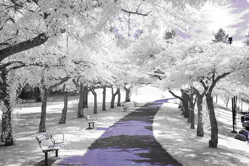 burnabymountain park2-ir