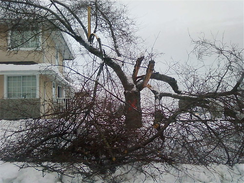 Neighbour's busted tree
