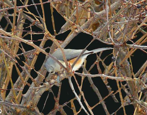 bird-in-prayer-3