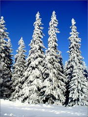 Happy New Year! (Stella VM) Tags: blue trees winter sky white mountain snow color colour tree nature beautiful beauty forest landscape newyear bulgaria wonderland spruces bulgarian vitosha зима планина дърво българия витоша красив сняг theunforgettablepictures fbdg worldwidelandscapes новагодина natureselegantshots снежен