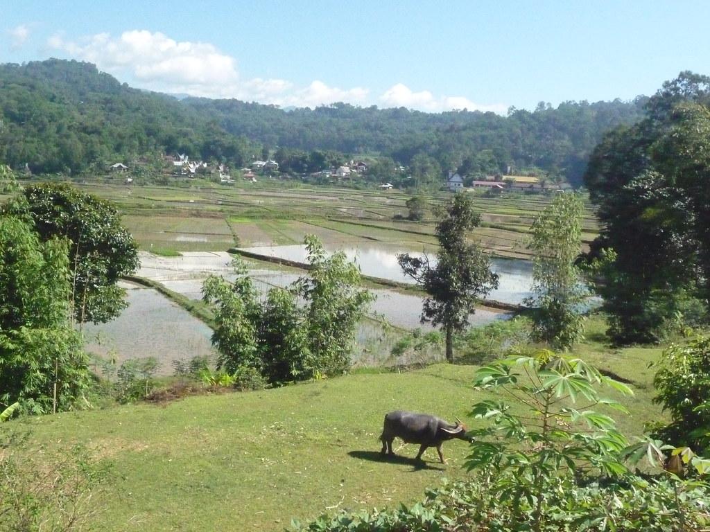 Pays Toraja Visite 3 (7)