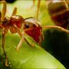 ~ ANT ~ (ViaMoi) Tags: macro closeup insect photo spring ant digitalcameraclub abigfave platinumphoto anawesomeshot aplusphoto viamoi