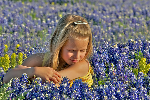 Bluebonnets April 2010 12