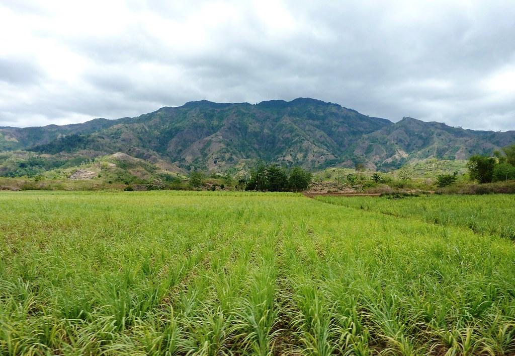 Negros-Dumaguete-Mabinay-Bacolod (138)