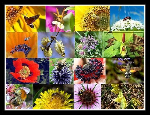 Mosaique [Pollens et biodiversité]