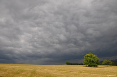 L'orage arrive (Excalibur67) Tags: sky cloud storm nature landscape nikon ciel arbres alsace nuage paysage orage d90 vosgesdunord cloudslightningstorms