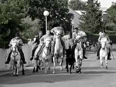 Saint-Auns  Fria de Pentecte 2011 (kat's here) Tags: horses cheval caballos feria bandido chevaux abrivado fetevotive gardians staunes saintauns staunesfte2011