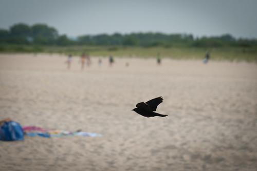 Sandy Hook-31