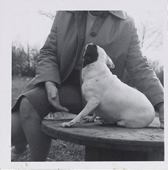Dog posing on table, ca. 1955