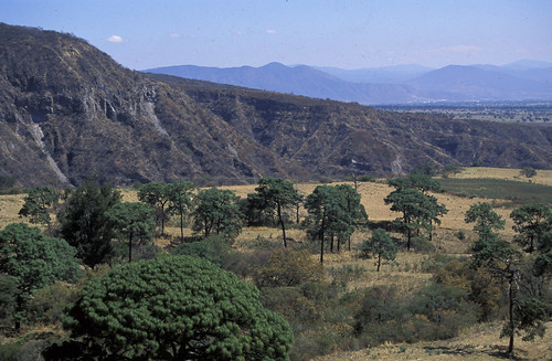 oak savanna, view, Vulcan Colima, Colima MX, 1997_03_23 001.jpg