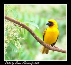 2 (CLICK GROUP   Moeen) Tags: nature colors birds wildlife platinum natures   flickrsbest    colorsinourworld