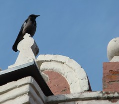 on the monastery wall (katunchik) Tags: morning wall moscow sony crow dsc h9