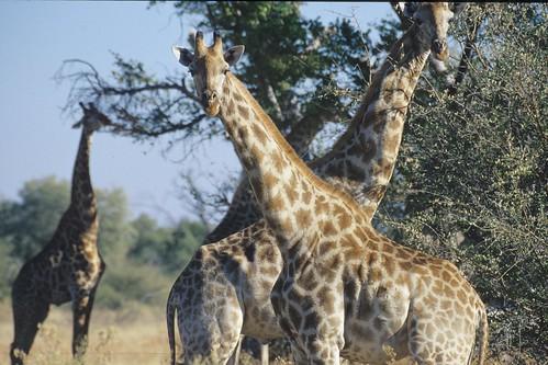 South Africa. mazzaliarmadi.it wildlife