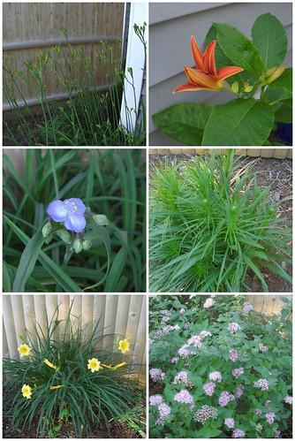 June 18 Flower Mosiac