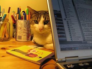 coding cat-egories