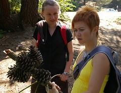 Yulka's New Cube Decor (a_sorense) Tags: anna pinecones yulka mclarenpark