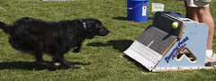 Chase Flyball
