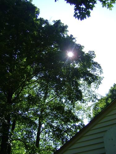 sun at last!