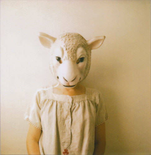 sheep / Jen Gotch