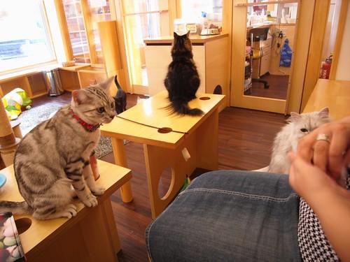 猫カフェ「キャットテイル」@生駒