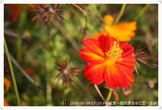 20080809三芝淡水全家遊 (8)