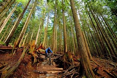 Matt on CBC (andy_c) Tags: canada bike bicycle vancouver cycling bc britishcolumbia mountainbike bikes mtb cbc seymour freeride