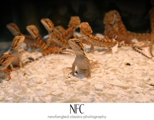 reptile expo 8