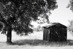 Alentejo (Carla Robalo Martins) Tags: bw tree portugal expression cano pb halloffame alentejo rvore barraca greed estremoz bestofflickr magicalmoments blackandwhitephotography goldenglobe wonderfulworld mouseion tistheseasontobejolly schattenbilder addictedtoflickr allwelcome blackwhitephotos passionphotography contactgroup photographyrocks natureplus iloveblackandwhite hitmewithyourbestshot ilbiancoilnero postaisilustradosdeportugal keepyoureyesopen envyofflickr worldclassimage lavidaenblancoynegro exemplaryshots wonderfulshots worldphotography wonderfulphotosfortheworld bwartaward nightmorning goldstaraward yourpreferredpictures allkindsofbeauty damniwishidtakenthat abovealltherest allmemorieswelcome 100arz photographersgonewild seriousphotographers monosepia goldenvisions blackwhitethecolorsofmylife flickrspictureperfect superbestshotsonflickr oprazerdefotografar astrattoedintorni worldwidetravelogue soyouwanttobeastar goldenpicturesworth1000words traveloguish qualitysurroundings redmatrix absolutelyperrrfect fairiesandwizardseyes addictedtophotograph monochromeformsinvisualarts yourpicsandshots aboutiberia naturescarousel goldsealings pioneerincreativity