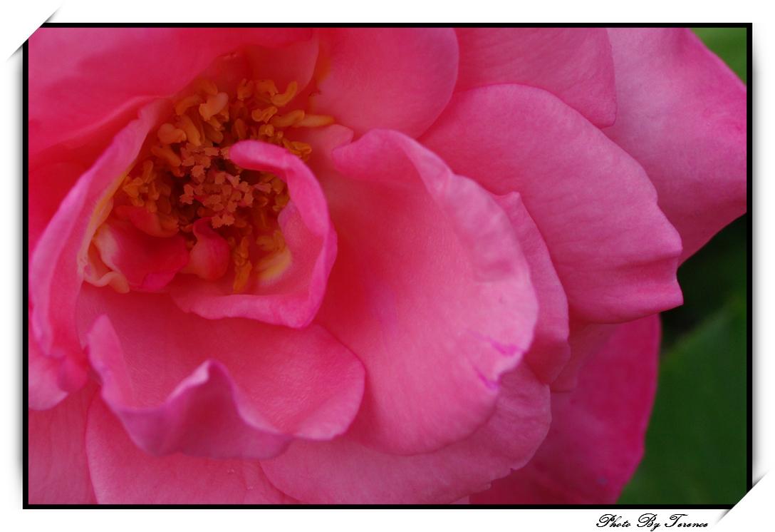 養老天堂--花蓮
