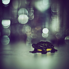 the years after (andrew sea james) Tags: macro toy 50mm nikon dof lasvegas bokeh turtle tortoise nikkor f18 topf200 d60