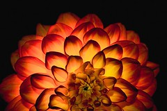 Sunrise (Jay Dee Photography) Tags: light orange flower rose canon backlighting