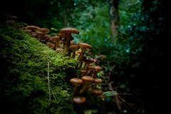 Mushrooms (Ragorder.com (Mark Stanley)) Tags: ireland dublin mountains tree mushroom forest mushrooms moss woods photoshopped funghi processed lightroom hellfireclub dublinmountains canon1785mm funghus canon400d canondigitalrebelxti markstanley newchemical