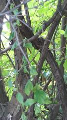 NATURAL ARRANGEMENT IN WOOD (roberthuffstutter) Tags: huffstutter