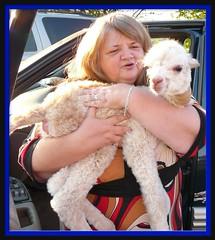 BABY Alpaca (chippewabear) Tags: baby alpaca fdsflickrtoys