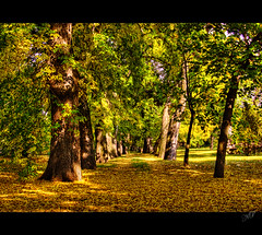 Golden Carpet (NatashaP) Tags: park autumn trees light shadow fall nikon hungary budapest explore thumbsup fallenleaves naturesfinest bigmomma d40 supershot interestingness190 challengeyouwinner abigfave anawesomeshot aplusphoto infinestyle theunforgettablepictures infinestile theperfectphotographer pfogold multimegashot obq reflectyourworld