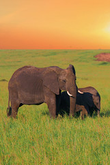 Elephants (Petits Voyages) Tags: africa elephant animal atardecer kenya absolutely parc elefante afrique masaimara savane lphants digitalcameraclub pachyderme platinumheartawards pachydermes perrrfect absolutelyperrrfect